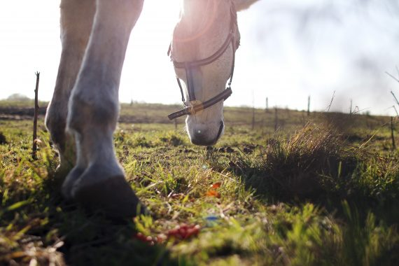 HORSE TRIVIA: TEST YOUR EQUINE KNOWLEDGE